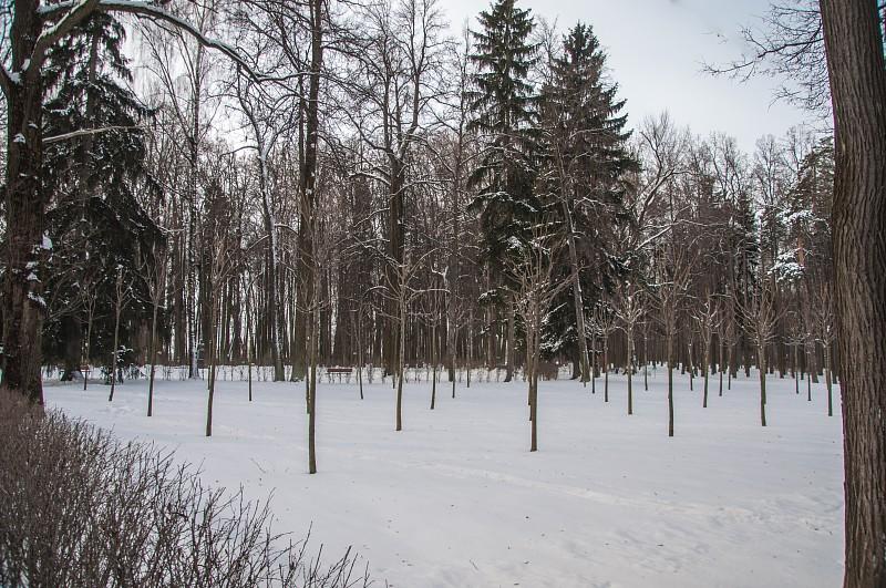 Роща кенконс Деревья высажены косыми рядами, в шахматном порядке.