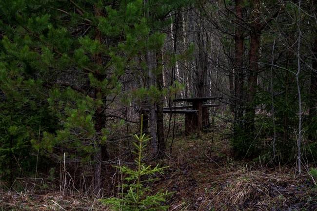 Вместо деревни сейчас растет лес.