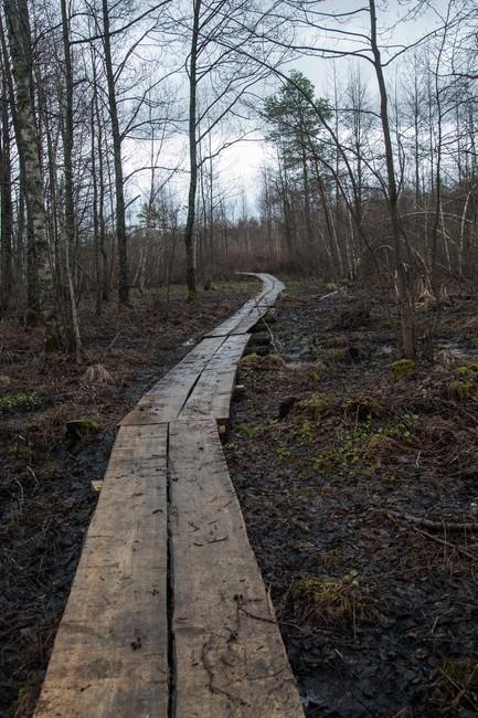 Исуповское болото