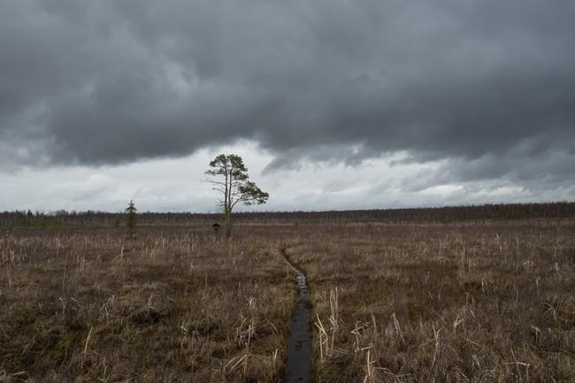 Исуповское болото.